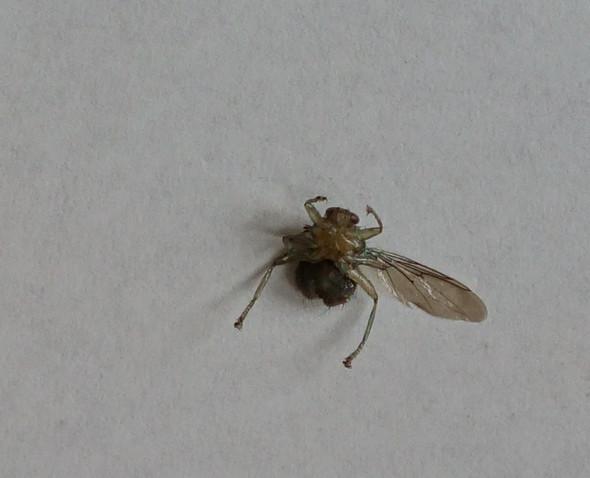 Bild3 - (Insekten, welches)