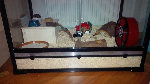 Ihr Gehege - (Hamster, Terrarium, artgerecht)
