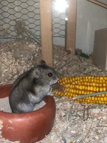 Hamster Runtergefallen