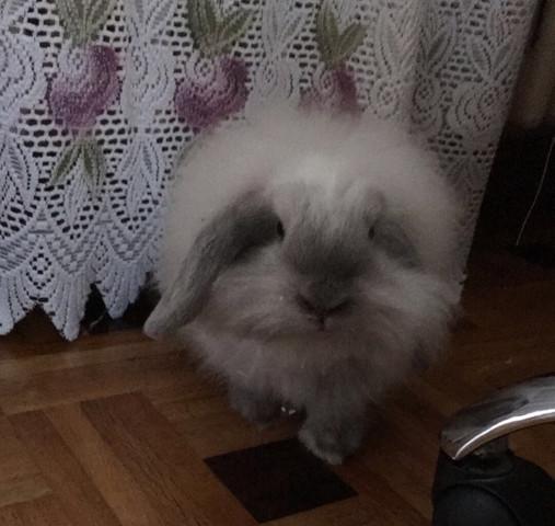 hier ebenfals - (Kaninchen, Winter, Zwergwidder)