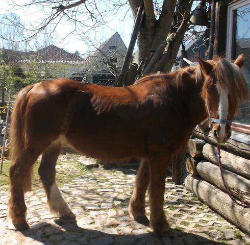 hat mein pferd jetzt auch noch einen knick in der wirbels ule tiere pferde reiten. Black Bedroom Furniture Sets. Home Design Ideas