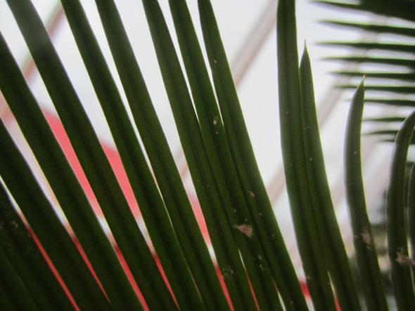 hat meine pflanze blattleuse wenn ja wie bekomme ich die weg pflege pflanzen pflanzenpflege. Black Bedroom Furniture Sets. Home Design Ideas