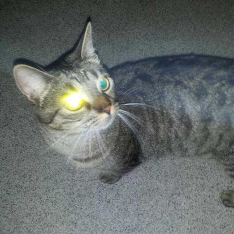 Blitzlicht effekt - (Recht, Tiere, Katze)