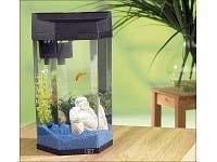 mein becken - (Aquarium, 7 liter)