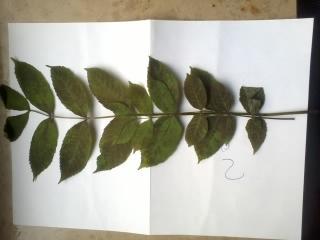Was Ist Das Für Ein Baum help me was ist das für ein baum pflanzen natur baumarkt