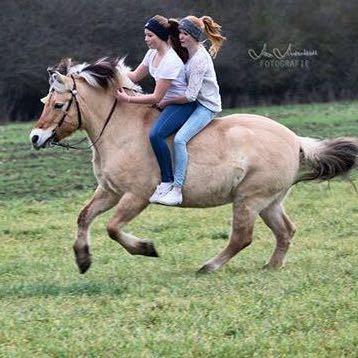 So stellen wir uns das vor  - (Pferde, Gewicht)