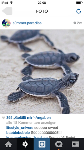 Schildkröte - (Art, Schildkröten)