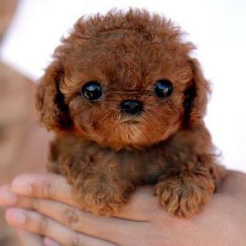 Hundebaby  - (Hund, Welpen, Hunderasse)