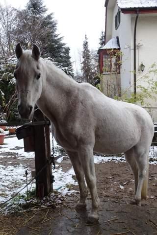hey, wisst ihr zufälligerweise ob man ein Pferd das 27 ist (nicht mehr geritten wird) noch longieren sollte?
