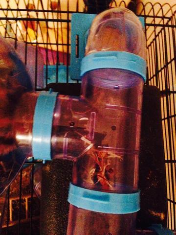 Die mit 3 Öffnungen  - (Hamster, Röhren)