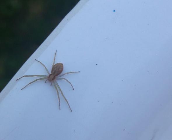 Benötige Hilfe - (Tiere, Spinne, Spinnentiere)