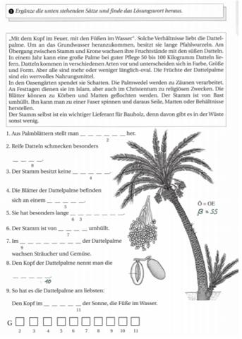 Hiiiilfe Geografie Wüste Dattelpalme?
