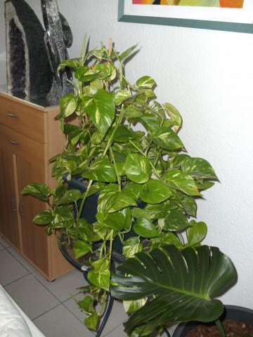hilfe schnell wie hei t diese pflanze danke giftpflanze vergiftung kinder. Black Bedroom Furniture Sets. Home Design Ideas