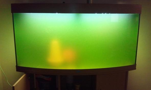 Warum ist das Wasser in meinem Aquarium grün?