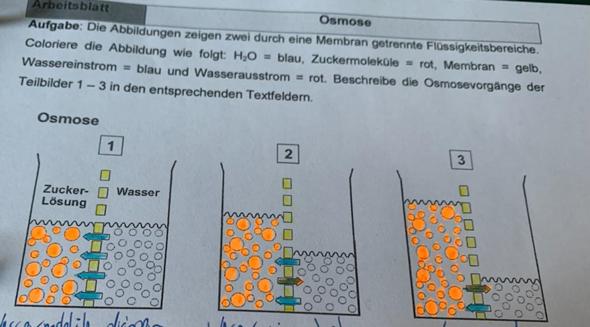 - (Biologie, Abitur, Osmose)
