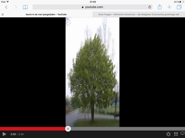 Der Baum  - (Bilder, Baum)
