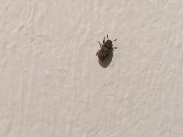 Käfer 2-3 mm - (Käfer, Ungeziefer)