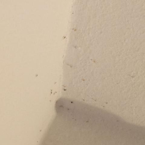 hilfe hunderte m cken in meinem zimmer was kann ich machen angst schlaf insekten. Black Bedroom Furniture Sets. Home Design Ideas