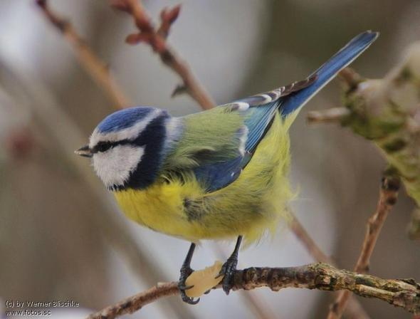 ich mag vögel noch ein bild von mir ^^ - (Internet, Nintendo DS)