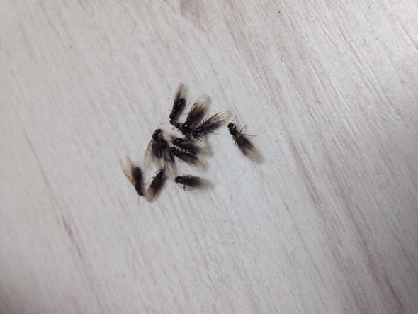 Hilfe Ich Werde Die Fliegen Nicht Los (Insekten, Fliegenplage