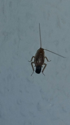 Hilfe Insekten In Der Wohnung Wir Bitten Um Artenbestimmung