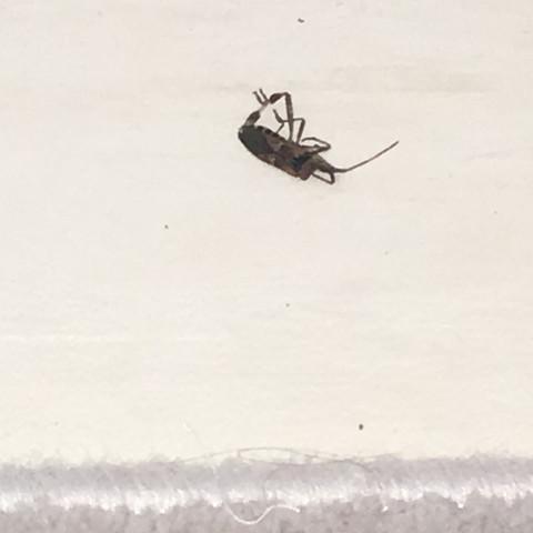 Wenn man die käfer umbringt riechen sie nach gras bzw die ganze wohnung riecht - (Natur, Kaefer)