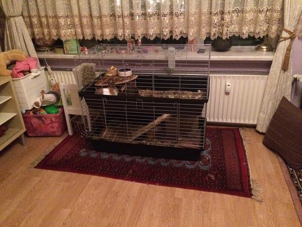 hilfe kaninchen drau en im februar winter. Black Bedroom Furniture Sets. Home Design Ideas