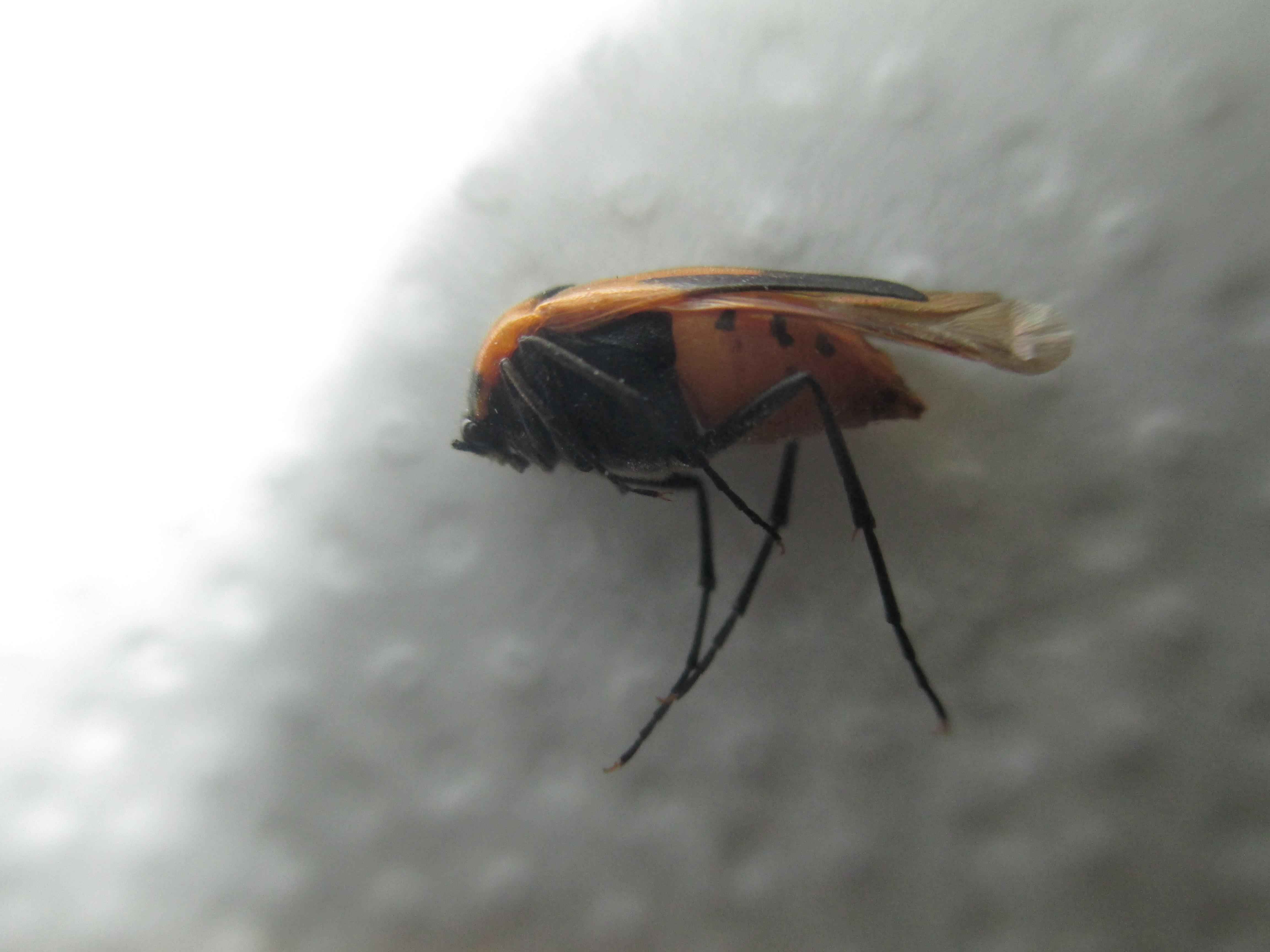 hilfe komisches insekt in der wohnung gesundheit tiere haushalt. Black Bedroom Furniture Sets. Home Design Ideas
