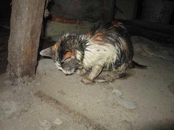 KK1 - (Tiere, Katze, Haustiere)