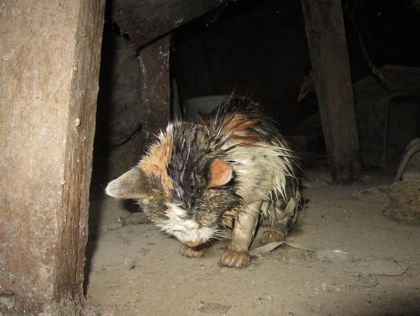 KK2 - (Tiere, Katze, Haustiere)