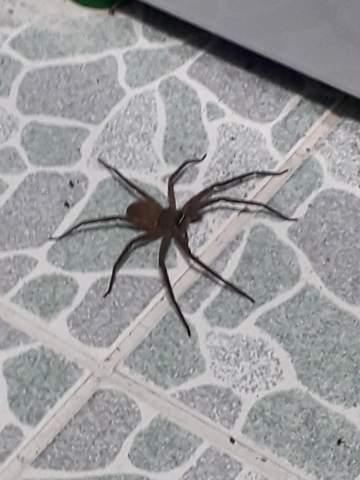 - (Tiere, Spinnen, Gift)