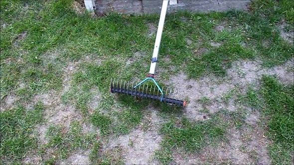Mein Rasen :( - (Garten, Rasen, rasenpflege)