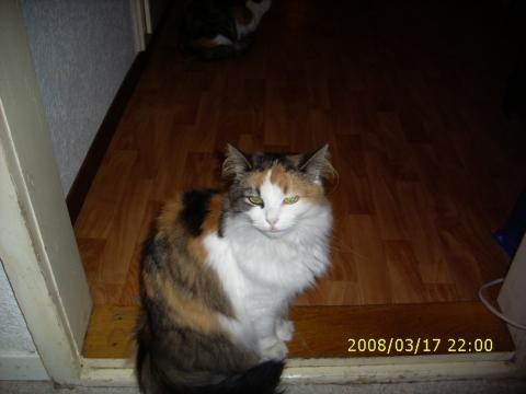 Meine Katze - (Katzen, Katzenklo)