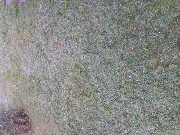 Hilfe Rasen Besteht Nur Noch Aus Unkraut Dungen
