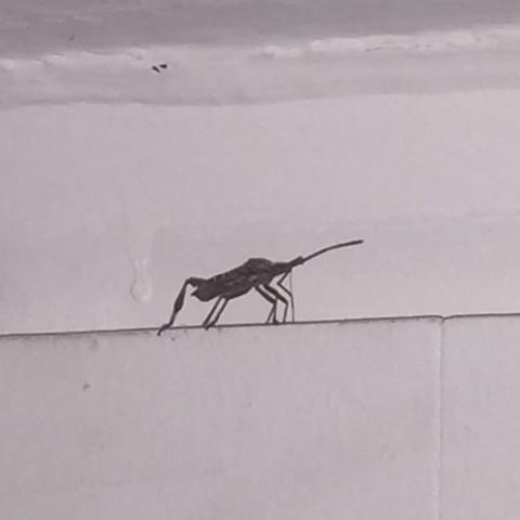 Das ist der Käfer - (braun, Kaefer, groß)