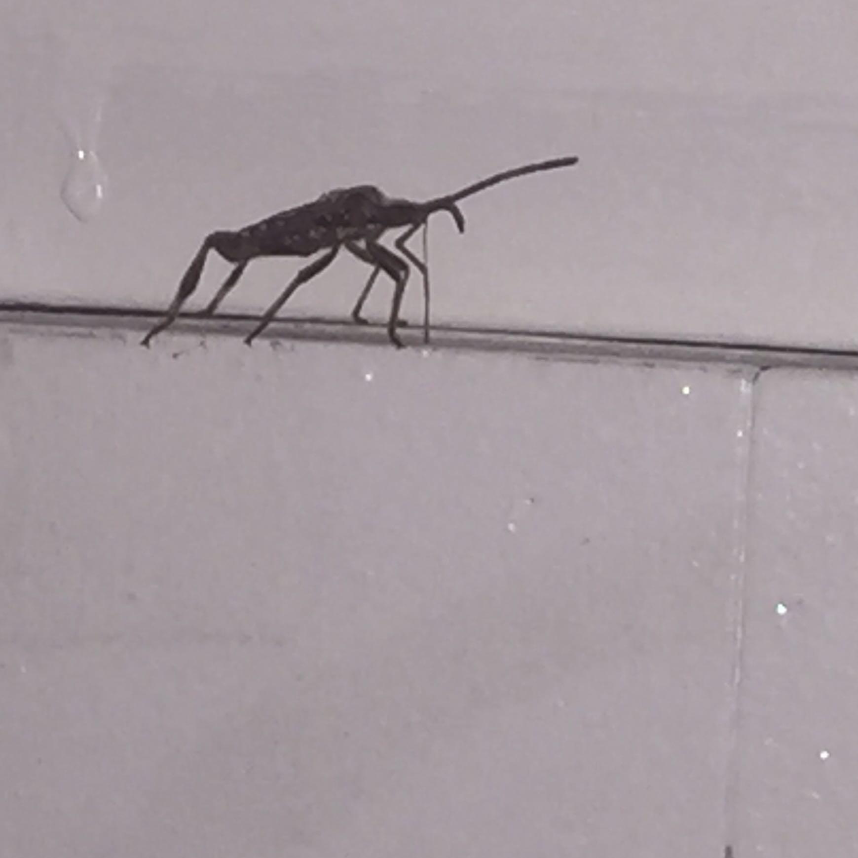 Hilfe ständig käfer in meinem zimmer? (braun, groß, gestank)