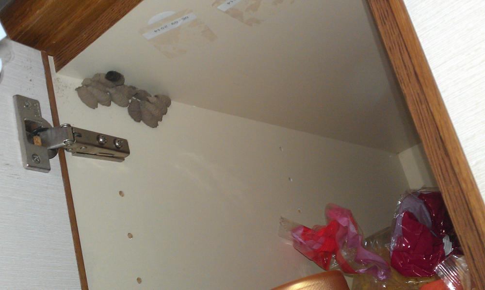 hilfe tier nest im schrank was amchen welche tiere sind das spinnen. Black Bedroom Furniture Sets. Home Design Ideas