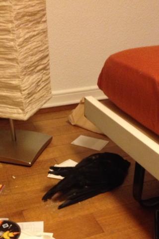 die kraehe neben meinem bett - (Vögel, Zimmer, tot)