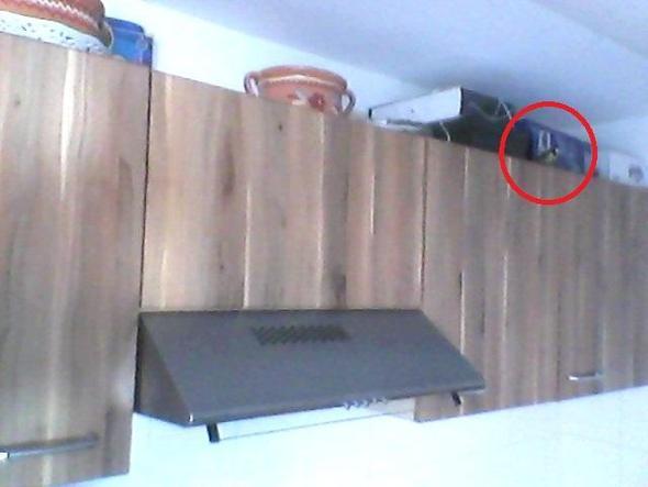 Hier  - (Küche, Vögel)