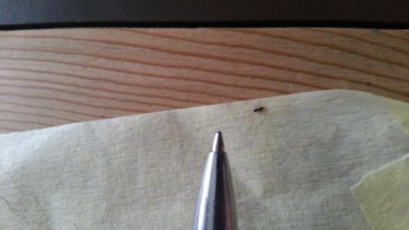 Hilfe, was für ein Tierchen / Insekt ist das?