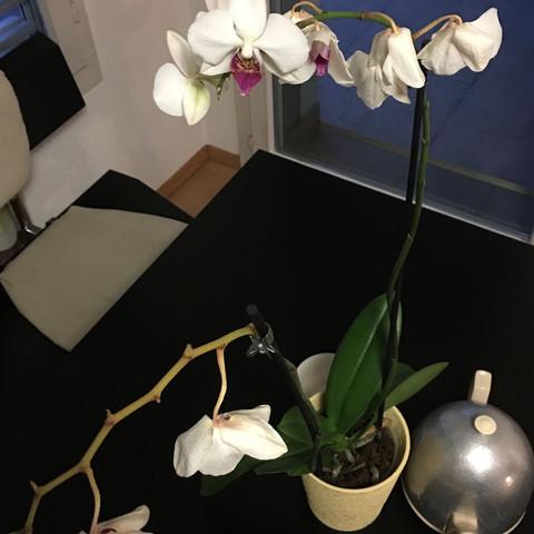 Hilfe! Was ist mit meiner Orchidee los?