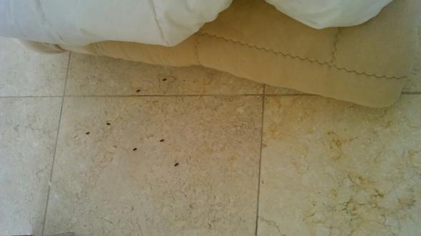 alte Decke - (Ungeziefer, Textilien)
