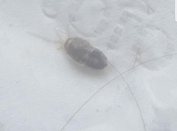 Schlafzimmer - (Tiere, Insekten, Kakerlaken)