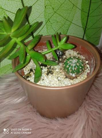 Hilfe weißes komisches Zeug auf meinem Kaktus?