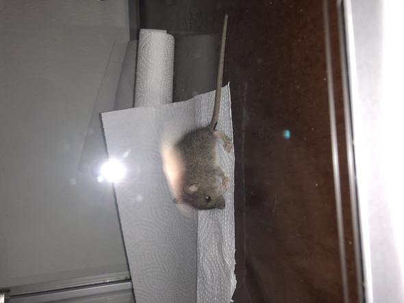 - (Garten, Maus)