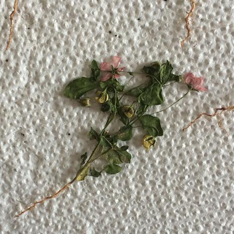 1. Pflanze  - (Schule, Biologie, Garten)