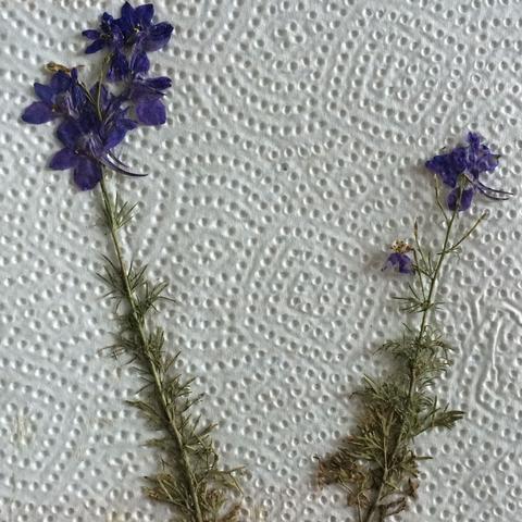 2. Pflanze  - (Schule, Biologie, Garten)