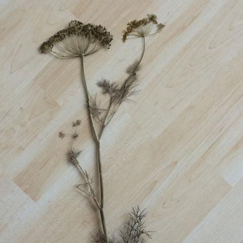3. Pflanze  - (Schule, Biologie, Garten)