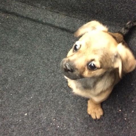 9 Wochen  - (Hund, Mischling)