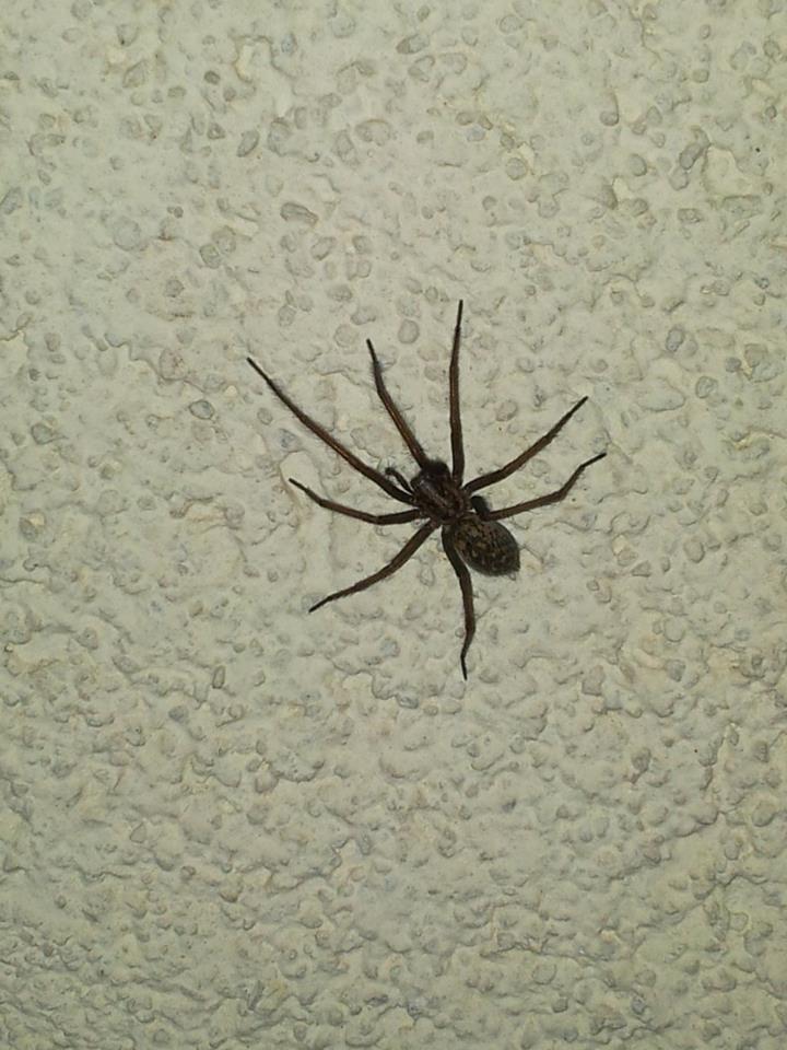 hilfe welche spinnenart tiere hund spinnen. Black Bedroom Furniture Sets. Home Design Ideas